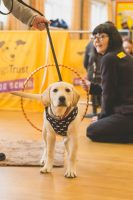 lab puppy coming through hoop branding.jpg