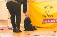 black laso being rewarded for sit branding.jpg