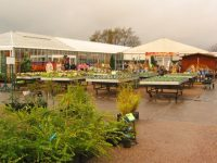 Wyevale sells Bridgemere Gardens to Blue Diamond