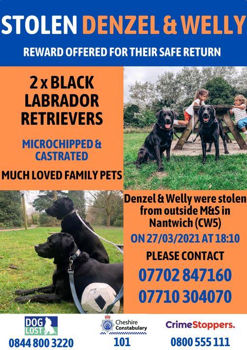appeal and reward for return of black Labrador dogs stolen