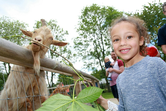 2. Neela Casey, 5 meets our Golden Guernsey goats at the zoo