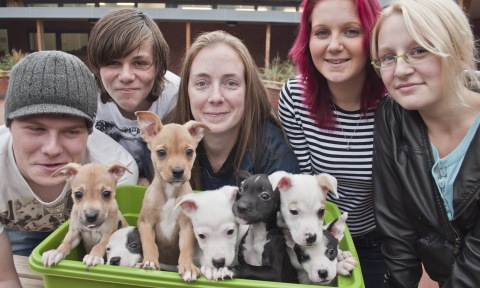 Puppies dumped in cemetery saved by Nantwich team