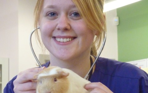 Guinea pig 'Ice' star of Reaseheath College's new veterinary room