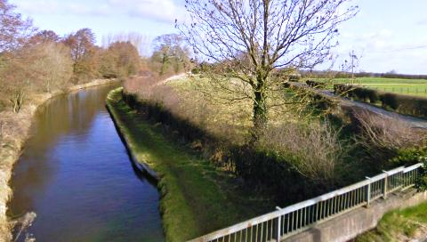 Stray cow sparks fire crew rescue at Nantwich canal