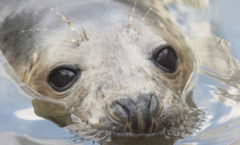 Rescued seal pups at Stapeley Grange Wildlife Centre