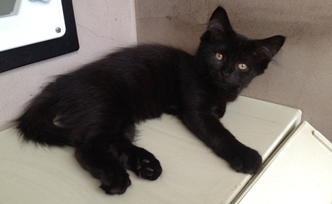 Nantwich animal centre's plea for help to rehome abandoned cats