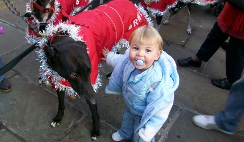 Greyhound Rescue Christmas Fair set for Nantwich Civic Hall