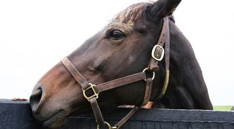 Secret Nantwich abattoir film of slaughtered horses sparks anger