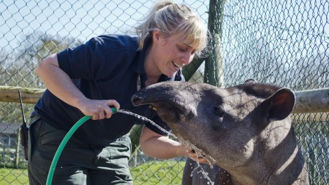 Reaseheath College zoo in Nantwich opens for World Tapir Day