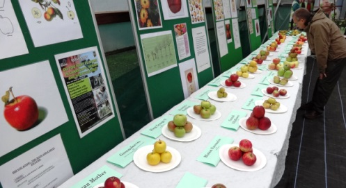 Hundreds of visitors enjoy Reaseheath Apple Festival in Nantwich