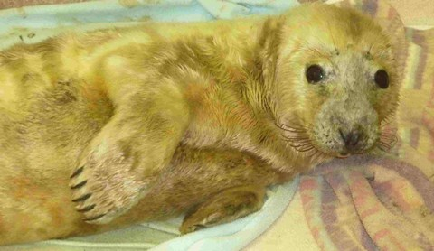 Seal pups in Nantwich - main image