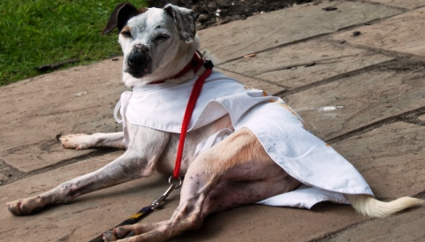 Appeal to Nantwich animal lovers to offer Paddy final chance