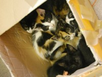 Nantwich RSPCA staff care for kittens found dumped in box