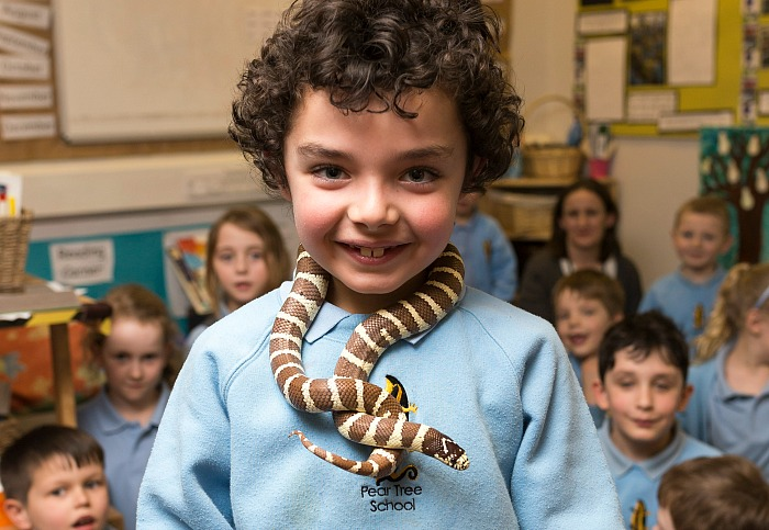exotic animals - A Year 2 Pear Tree pupil wearing a snake scarf