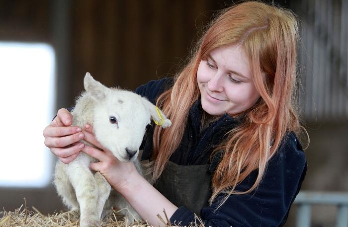 Agric apprentice Chloe Cooper - lambing