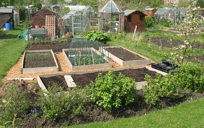 Allotments, pic by Mike Quinn, creative commons licence