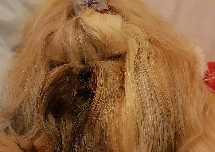 Ashleigh Rose and Gladys - dog award