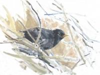 Local artist to exhibit wildlife work at Nantwich Museum