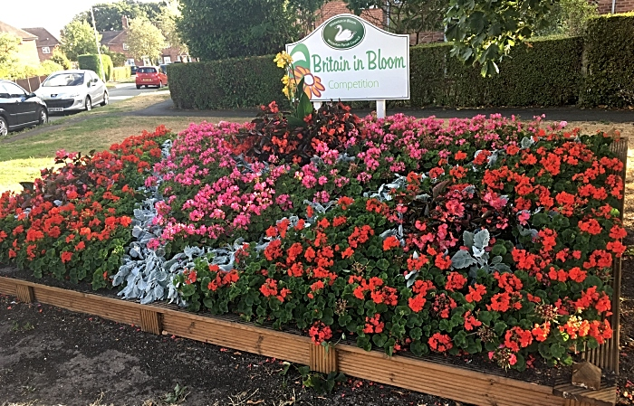 Beech Drive flower bed - photo by David Clews