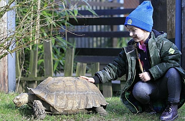 Bella-Rose Davenport, 5 yrs, Emmy African spurred tortoise (1)