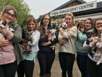 Rescued puppies nursed by Reaseheath College students in Nantwich