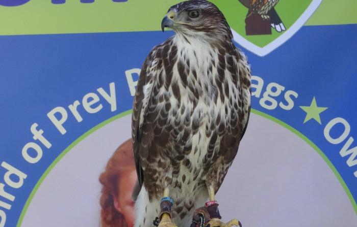 Bird of prey display, Big taste event