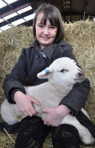 Lambing - Carys Williams 8 yrs from Sandbach (2)