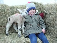Hundreds of families to flock to Reaseheath College's lambing weekends