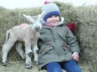 Hundreds brave winter chill to enjoy Reaseheath's newborn lambs