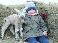 Hundreds brave winter chill to enjoy Reaseheath's newborn lambs