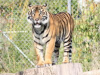 Chester Zoo to be allowed to reopen from Monday