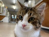 "RSPCA plea to find ""oddball"" cat new home in Nantwich"