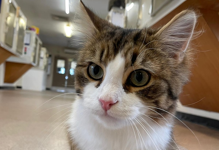 Clawd - new home for cat