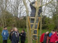 Nantwich cubs in conservation work at Coed Wen community woodland