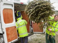 Christmas trees collection to raise funds for St Luke's Hospice