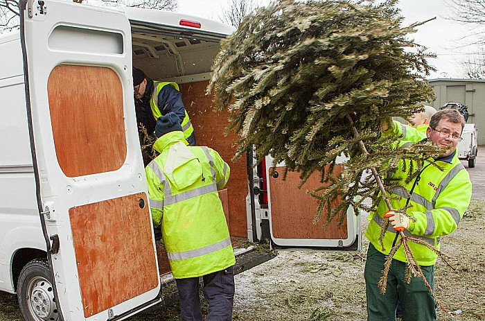 Collecting christmas trees