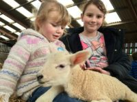 Families flock to Reaseheath College lambing weekend in Nantwich