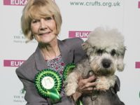 Nantwich woman celebrates Crufts accolade for Terrier Harrison