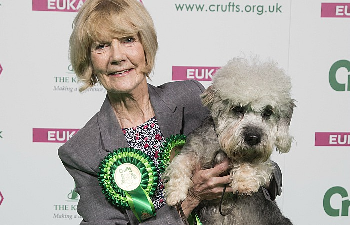 Crufts win for Terrier Harrison