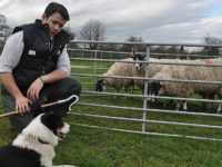 Hundreds expect to flock to Reaseheath College lambing weekend in Nantwich