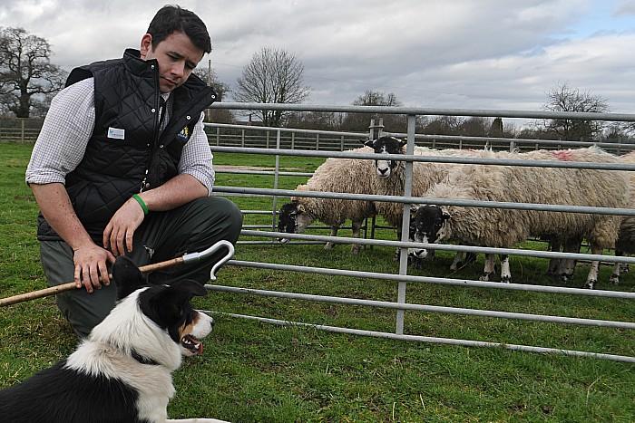 lambing - Dan Henderson and Floss pen sheep
