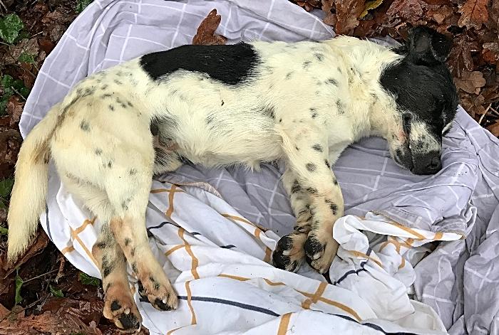 Dead dog found in Poole Hill Road near Nantwich