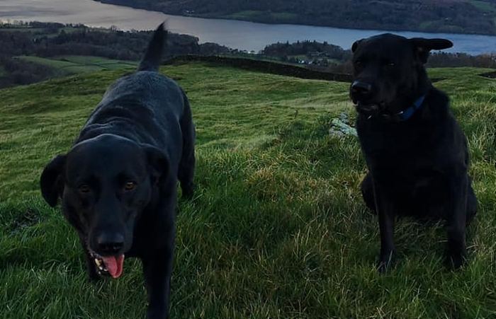 Denzel and Welly stolen dogs
