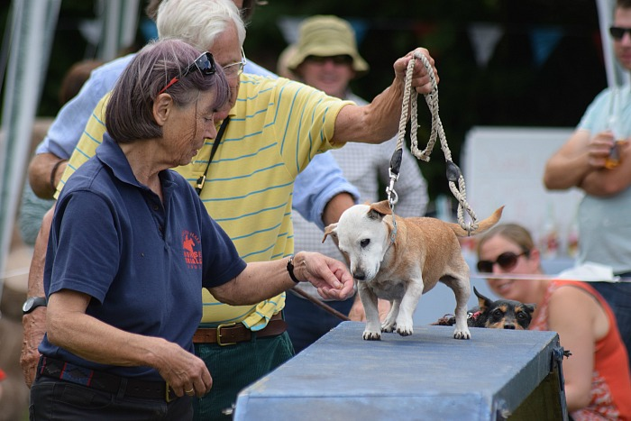 Dog agility show - Pickles and owners