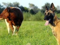 Police and rangers target irresponsible dog owners in South Cheshire