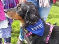 Dog owners invited to mass dog walk along Shropshire Union Canal