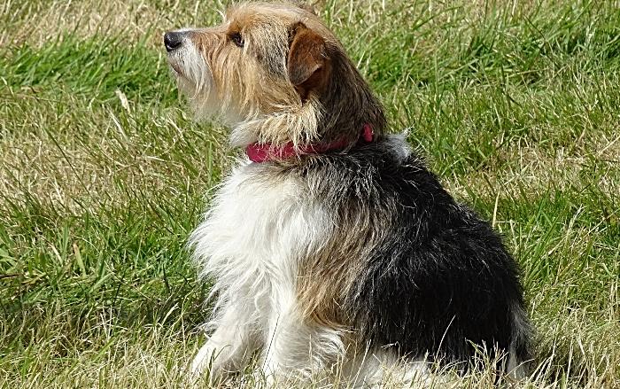 Dog show participant