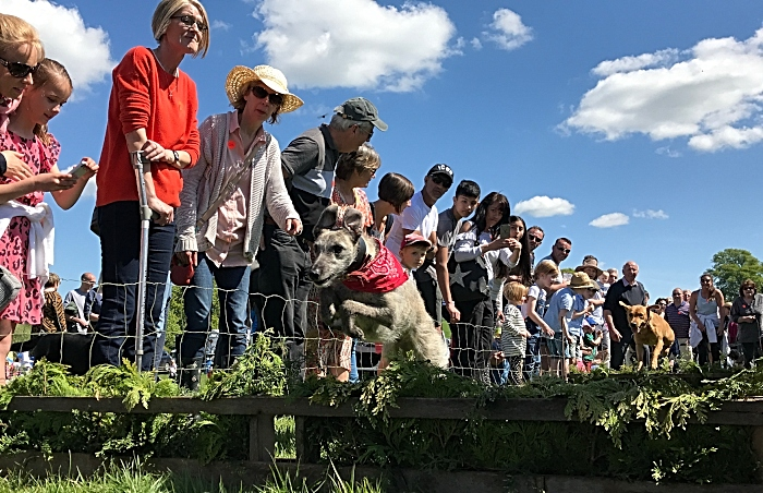 Dog & terrier racing (1)