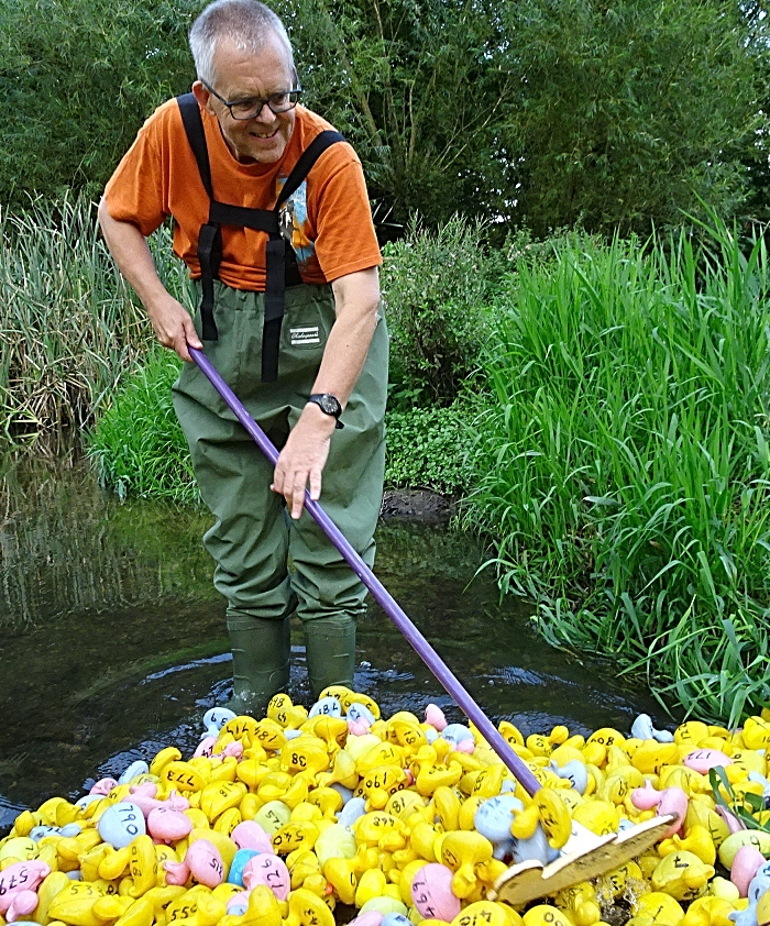 Duck marshal Mark Ray stirs the ducks in readiness for the Duck Race (1)
