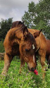 Elara - breeder's award-winning foal